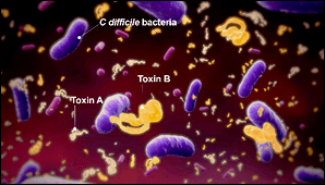 Regrowth of C Difficile and Release of Toxins Contributes to the Risk of CDI Recurrence